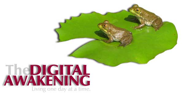 Cover graphics - Two frogs on a lilypad
