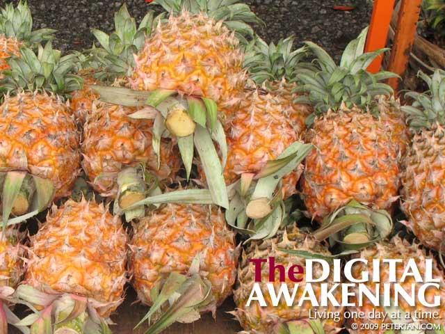 Pineapples - nenas