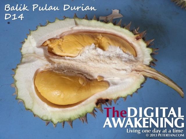 Balik Pulau D14 durian