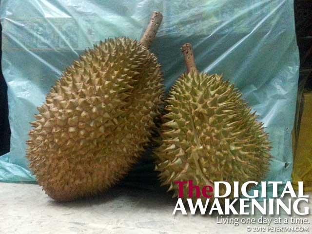 Durian kampung from Jelebu, Negeri Sembilan