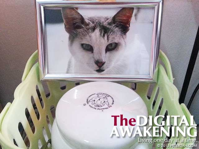 Fei Por the cat's ashes interred in a urn