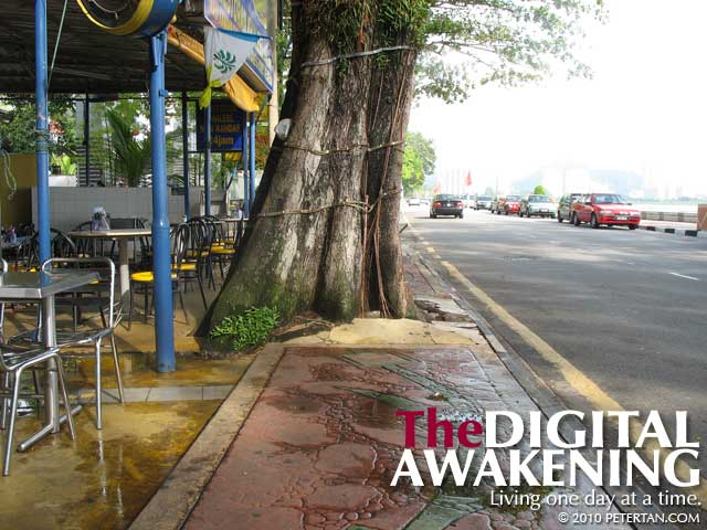 Casuarina tree outside Restoran Khaleel blocking almost the entire sidewalk at Gurney Drive